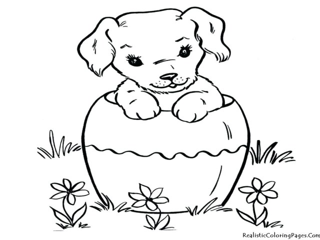 Dog And Cat Coloring Pages Dog Cat Drawing At Getdrawings Free For Personal Use Dog Cat