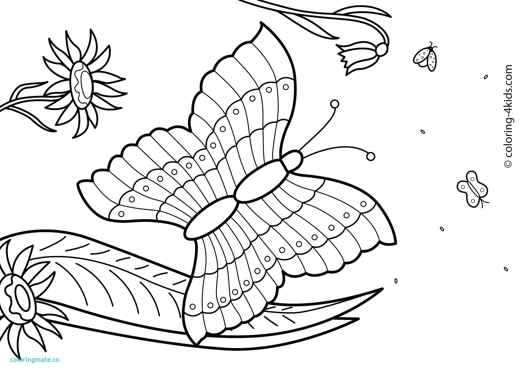 graphic relating to Summer Coloring Sheets Printable known as No cost Summertime Coloring Webpages Sensational Summertime Year