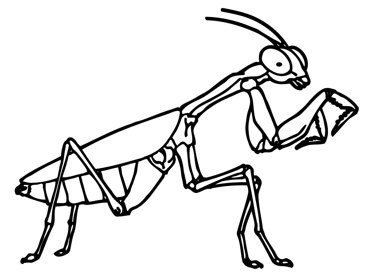 Little Bugs Coloring Pages for Kids - Easy Peasy and Fun | 900x1200