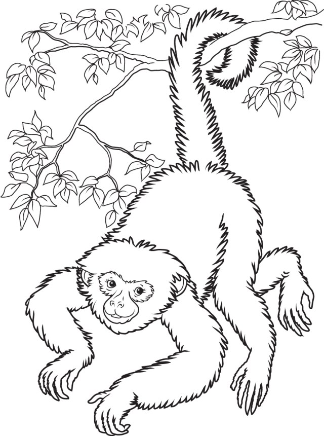 Monkey Coloring Pages Squirrel Monkey Coloring Pages
