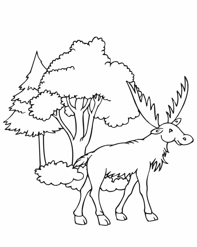 Moose Coloring Pages Free Printable Moose Coloring Pages For Kids