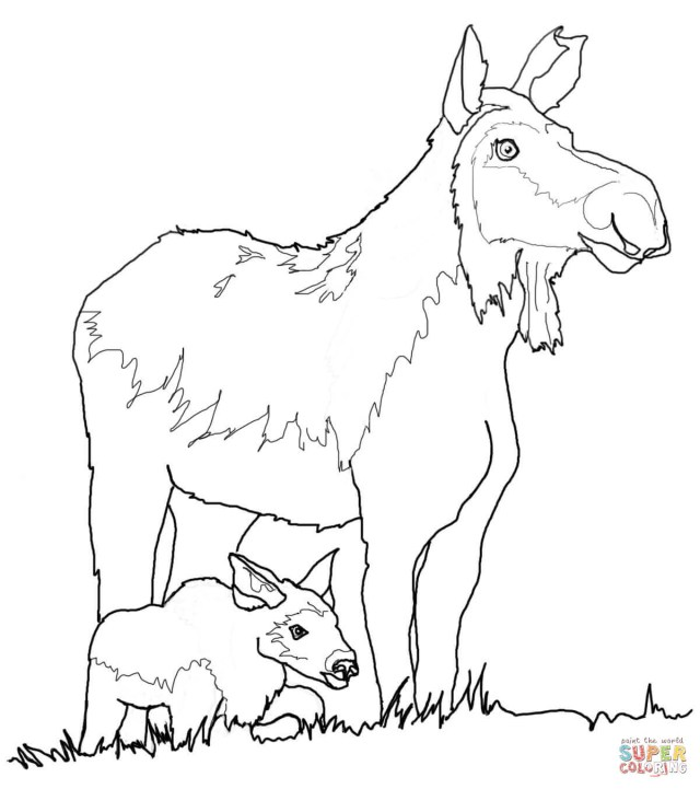 Moose Coloring Pages Moose Coloring Pages Free Coloring Pages