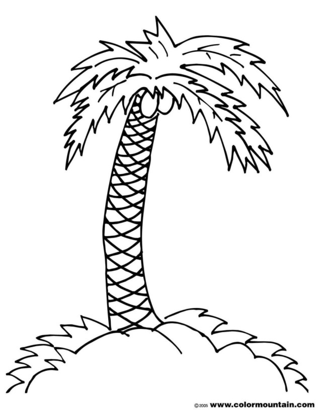 Palm Tree Coloring Pages Tree Coloring Pages Printable Palm Sunday Palm Tree Branch Colouring