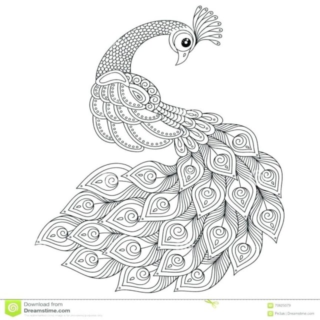 Peacock Coloring Pages Hurry Pictures Of Peacocks To Color Peacock Coloring Pages Graceful