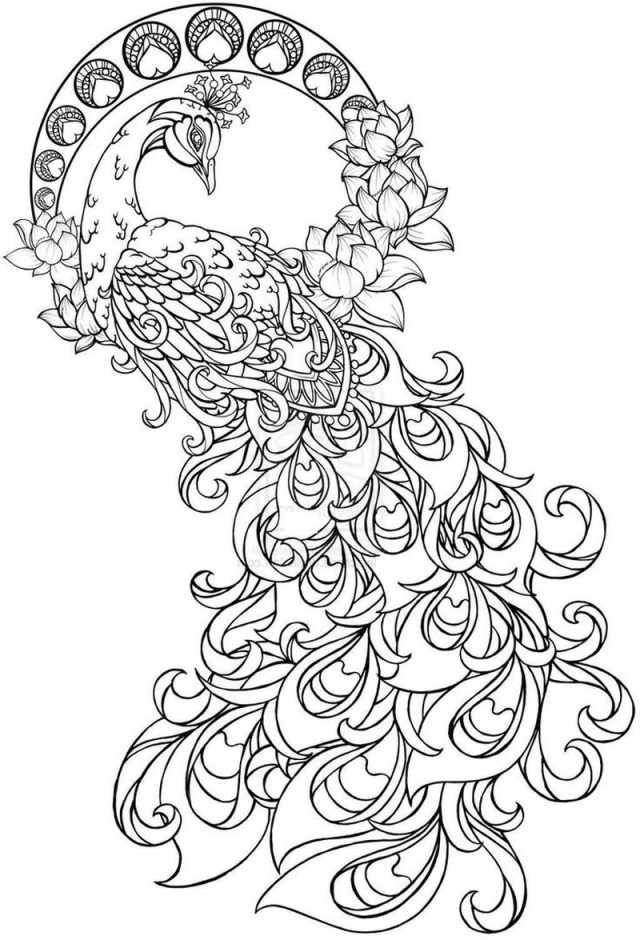 Peacock Coloring Pages Peacock Coloring Book Pages Free Coloring Sheets