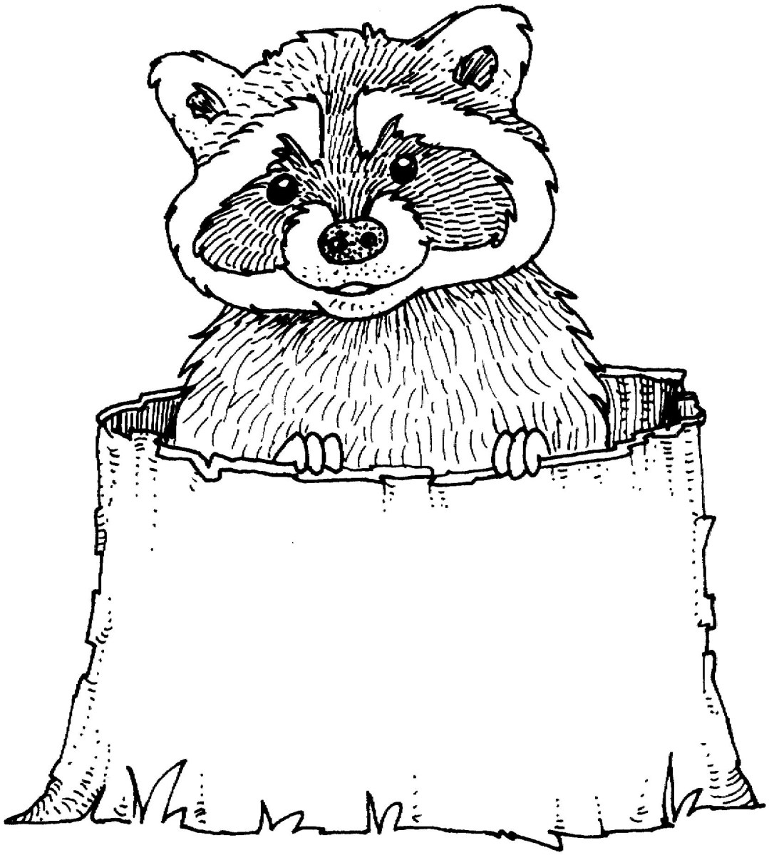 Raccoon Coloring Page Raccoon Coloring Pages