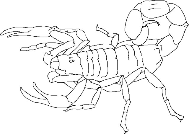 Scorpion Coloring Pages Free Printable Scorpion Coloring Pages For Kids
