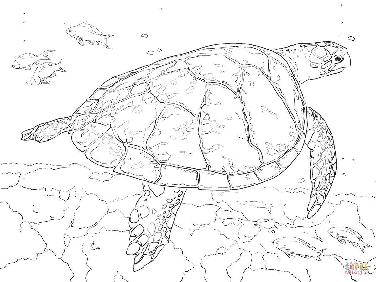 Sea Turtle Coloring Page 15 Sea Turtle Coloring Page Topsailmultimedia