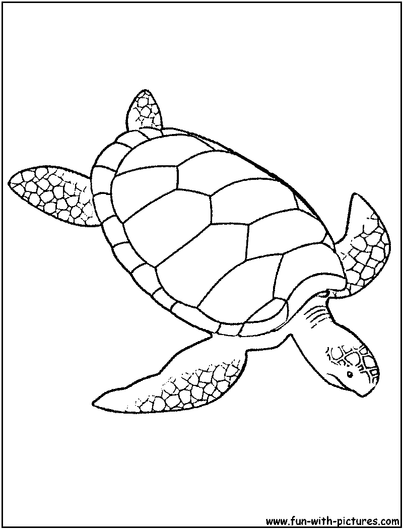 Sea Turtle Coloring Page Green Sea Turtle Coloring Page Fishes Pinterest With Curiertech