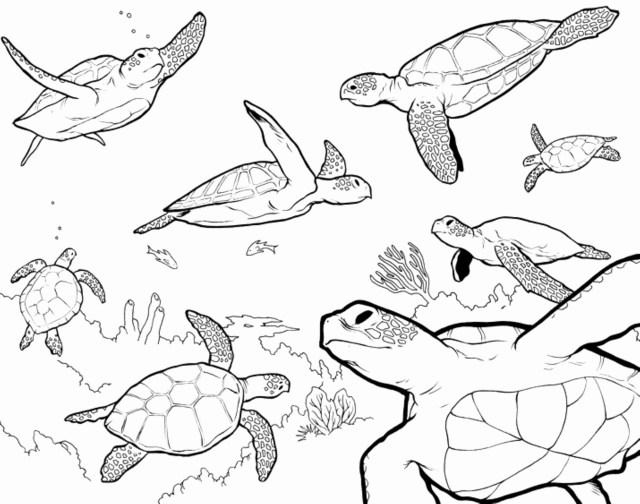 Sea Turtle Coloring Page Unique Loggerhead Sea Turtle Coloring Pages Exad