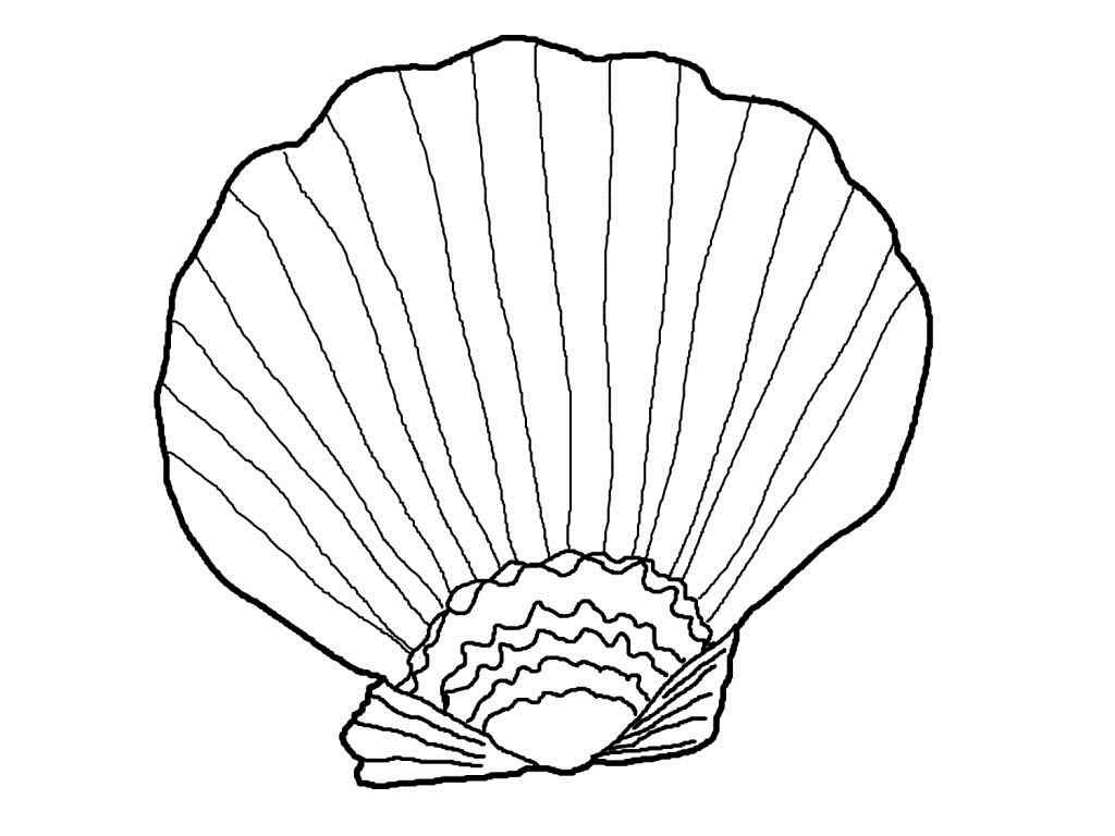 Seashell Coloring Pages Sea Shells Coloring Page J3kp Free