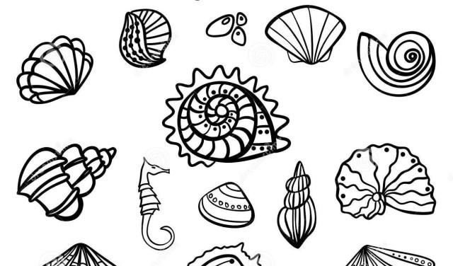 Seashell Coloring Pages Seashell Coloring Pages Alancastro