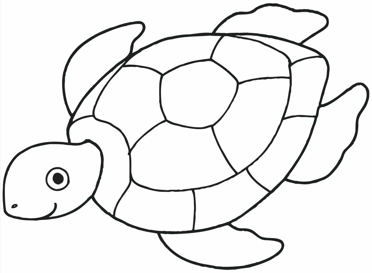Seashell Coloring Pages Turtle Shell Coloring Page At