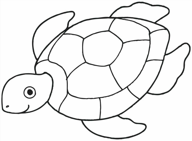Seashell Coloring Pages Turtle Shell Coloring Page At Getdrawings Free For Personal