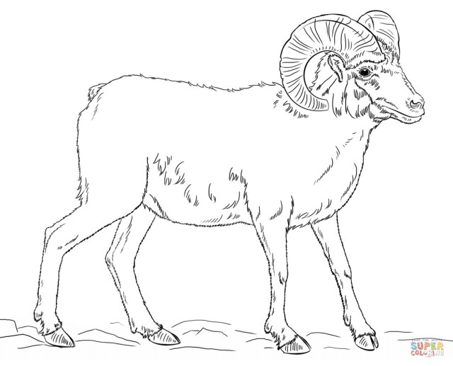 Sheep Coloring Page Bighorn Sheep Coloring Page Pages 8 Futurama