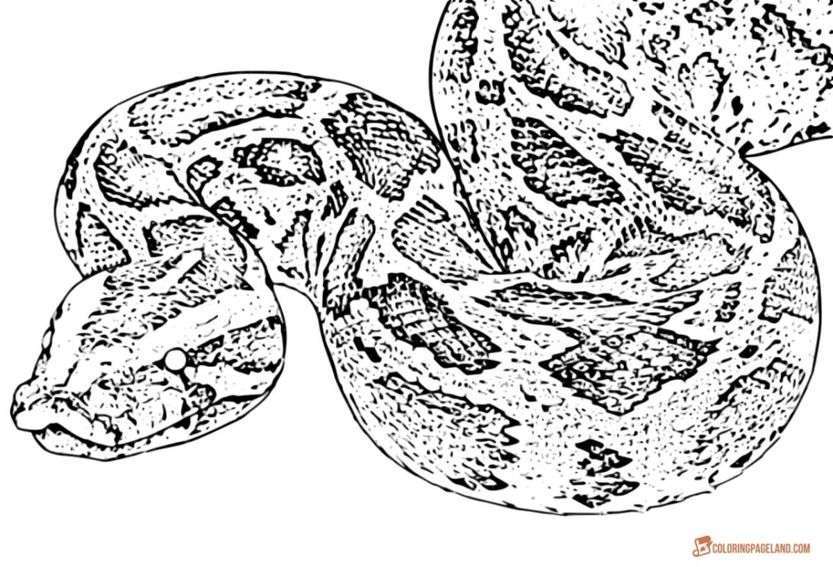 Snake Coloring Pages Coloring Page Snake Coloring Pages Images Fantastic Sheet Page