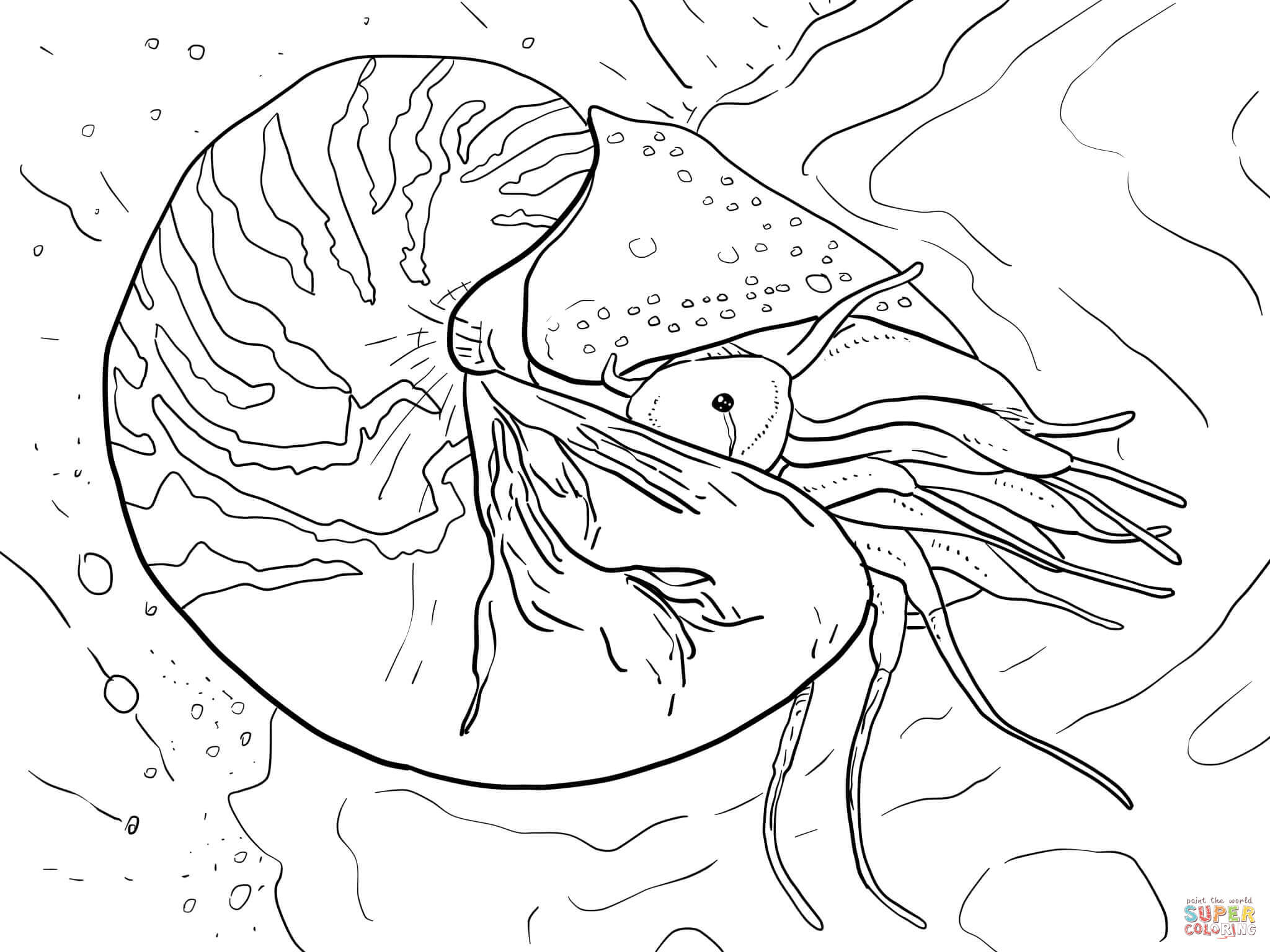 Squid Coloring Pages Vampire Squid Coloring Page Free Printable Coloring Pages Birijus Com