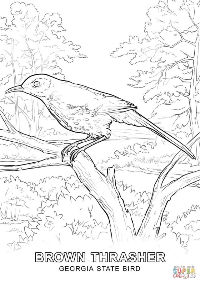 Tweety Bird Coloring Pages Birds Coloring Pages Free Printable Pata Sauti Amazing Bird For