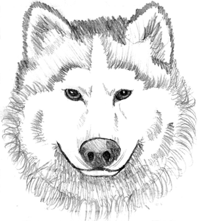 Wolf Coloring Pages Ba Wolf Coloring Pages Printable Kids Colouring Pages Coloring