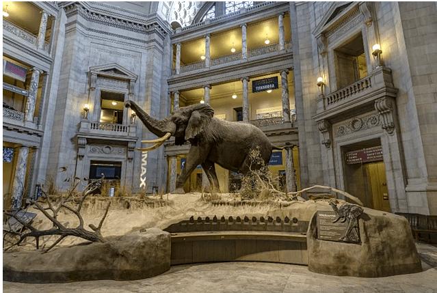 Doğa Tarihi Ulusal Müzesi – National Museum of Natural History