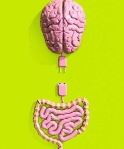İkinci Beyin
