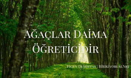 Ağaçlar Daima Öğreticidir.
