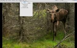 """Bild: Die unter Mac OS X standardmäßig installierte App """"Vorschau"""" liest die EXIF Dateien dieser Kameras vollständig aus, auch die Anzahl der Auslösungen."""
