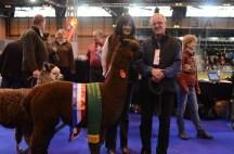 British Alpaca Futurity_NEC_150313 (022)