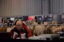 British Alpaca Futurity_NEC_150313 (052)