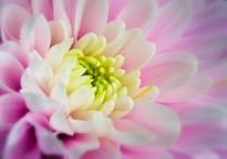 Flower Macro by Robert Revill
