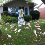 champagne-flamingos