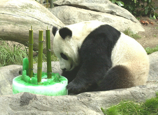 Cute Animals Eating Birthday Cake Or Just Celebrating