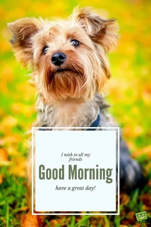 Good Morning Dog Funny : morning, funny, Funny, Morning, Images, Memes, Animals