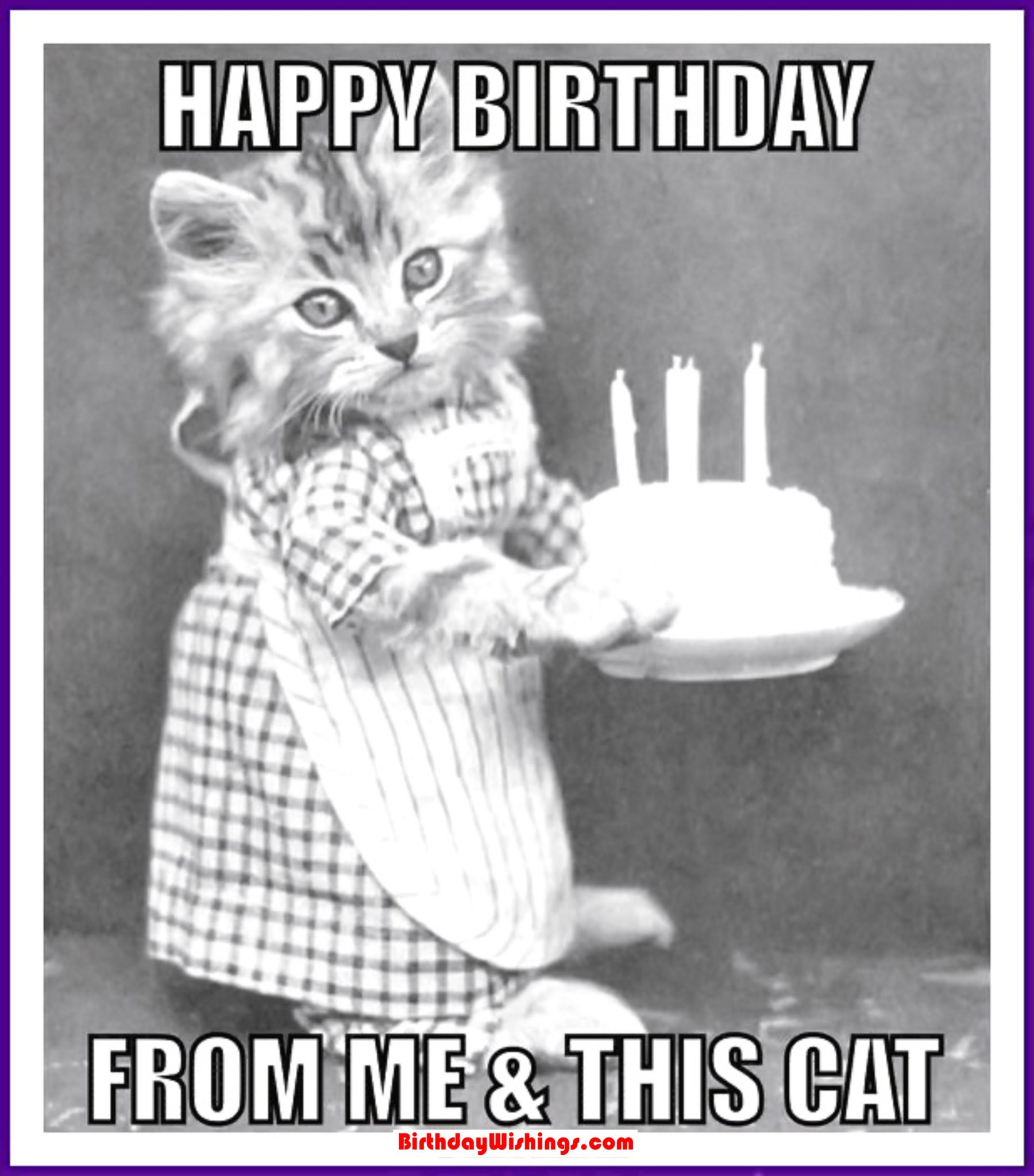 78?resize=1160%2C1320 funny happy birthday memes with cats, dogs & funny animals