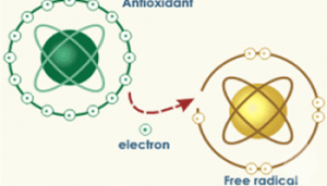 Para Ilmuwan Akhirnya Telah Menemukan Super Antioksidan