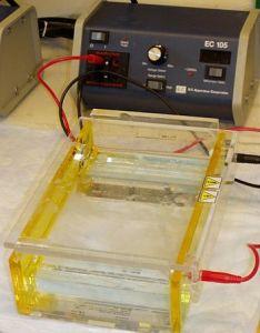 koloid elektrofores