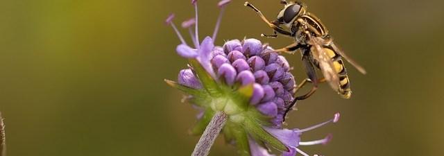 Senyawa Organik yang Berasal dari Hewan dan Tumbuhan