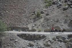 Afghan donkeys/Ânes afghans