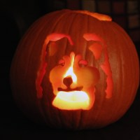 A Sheltie Pumpkin and a Sheltanda!
