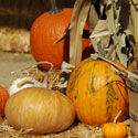 Harvest Festival is Coming Up!