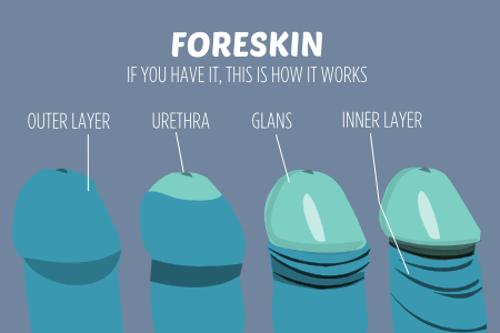 Sexual body parts HOW FORESKIN WORKS