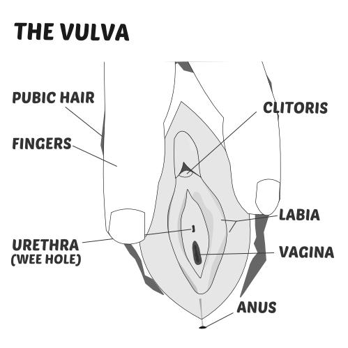 Vulva diagram autism