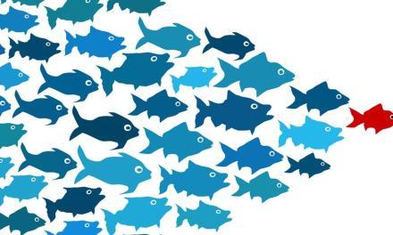 Ditawari MLM? Tim Seperti Apa yang Anda perlu Join?