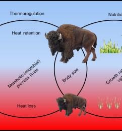 bisonatlarge jeff m martin body diagram of bison [ 2128 x 1196 Pixel ]