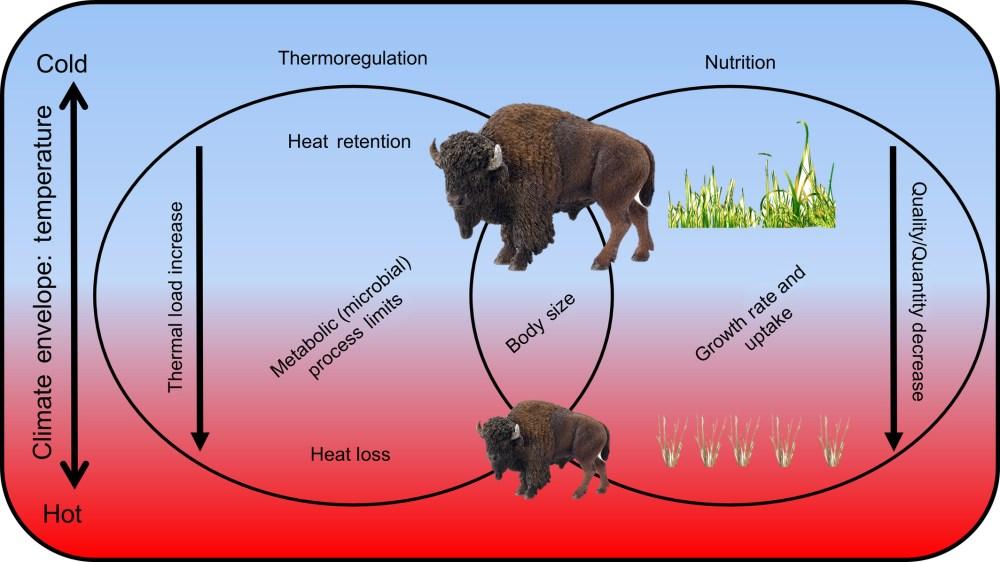 medium resolution of bisonatlarge jeff m martin body diagram of bison