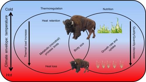 small resolution of bisonatlarge jeff m martin body diagram of bison