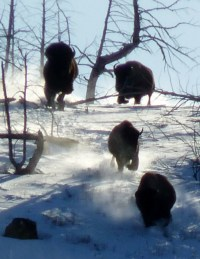 February | 2013 | Bison Quest Adventure Vacation Blog