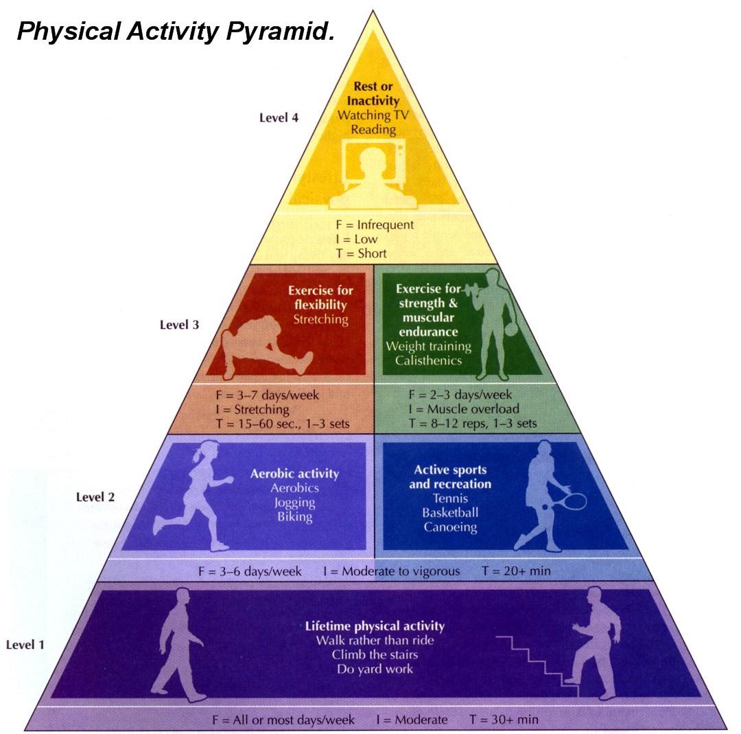 Grade 7 8 Fitness Portfolio