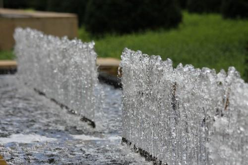 Botanic Garden Water