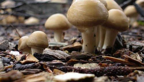Rules of Mushroom Engagement